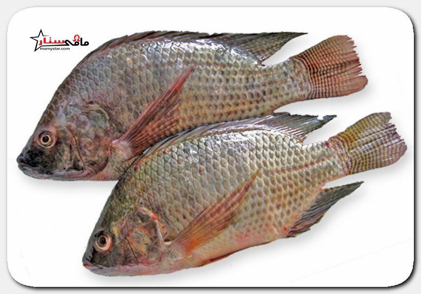 حلم السمك