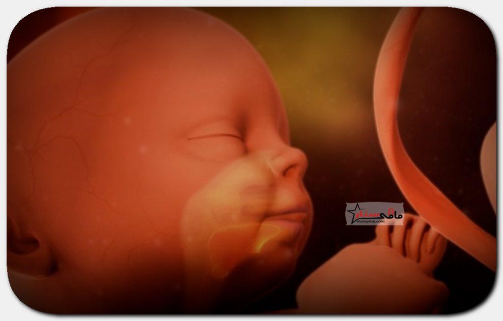 الاسبوع الخامس والعشرون من الحمل