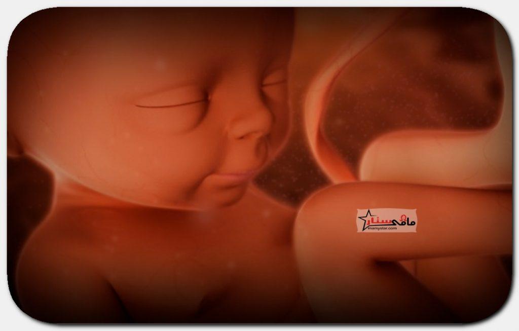 الاسبوع الرابع والعشرين من الحمل