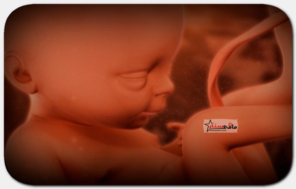 الاسبوع السادس والعشرين من الحمل