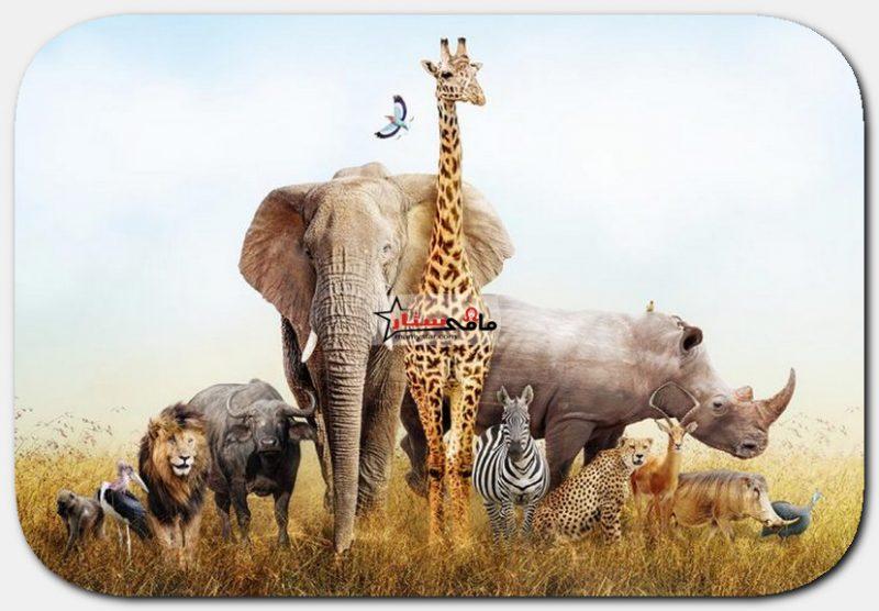 حقائق مثيرة وممتعة عن الحيوانات للأطفال