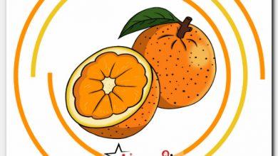 رسم برتقال بخطوات سهلة للاطفال